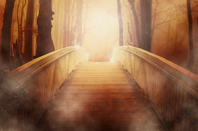 Mystifying Bridge In Forest, astonishing national forests,