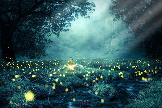 Forest At Night Time, astonishing national forests,